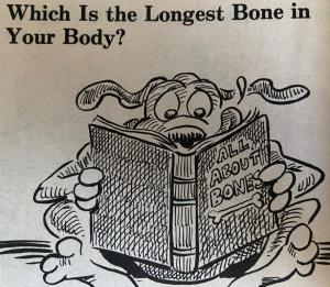Longest Bone in Body.